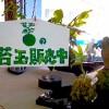 苔玉康介の苔玉販売いたします。