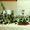 今年もあざみ野地区センターまつりに参加、苔玉クラブ。