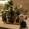 「花と森のコンサート」会場に苔玉飾りました。